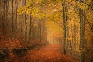 /Memórias Dum Dia De Outono
