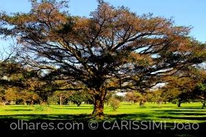 /Somos todos árvores