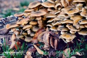 /Cogumelos fascinantes