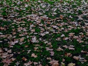 Outros/Sob o pulsar das folhas