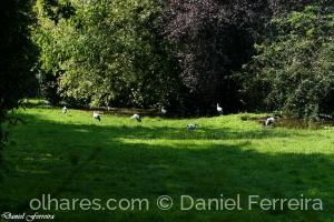 Paisagem Natural/Cegonhas do Parque