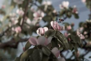 Paisagem Natural/Flor do Marmeleiro