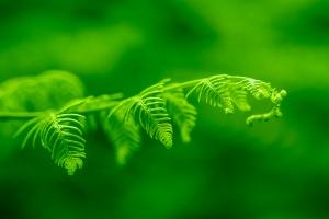 Paisagem Natural/the green fern