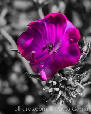 Paisagem Natural/Primavera renasce indiferente ao contexto...