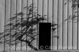 Fotografia de Rua/Dança na sombra!