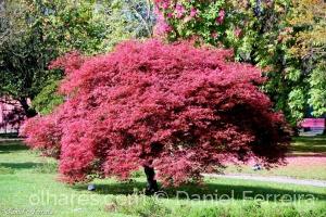 /Dia Mundial da Árvore
