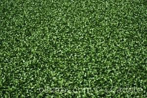 Paisagem Natural/green.green,green...