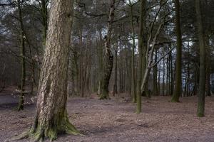 Paisagem Natural/Alderley Edge Forest, UK