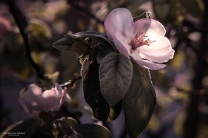 Paisagem Natural/Flor do Marmeleiro II