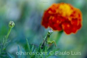 Macro/Orange