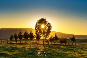 """Paisagem Natural/A tal """"golden hour"""""""