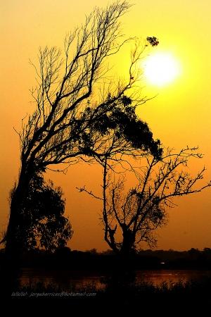 Macro/Por do sol em dias de fogo