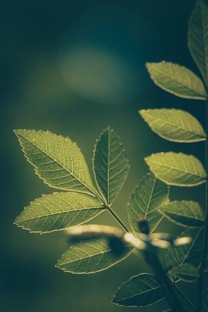 Paisagem Natural/as folhas da árvore