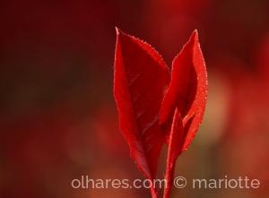 Macro/in red