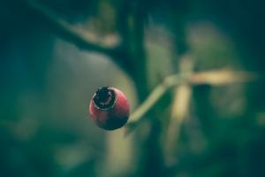 Paisagem Natural/o fruto ....