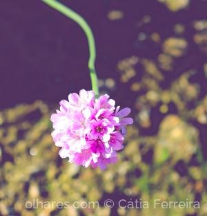 Macro/És amor, és flor!