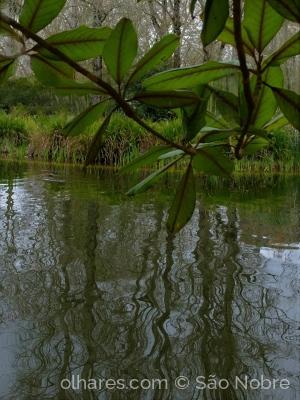 /Reflexos no Lago