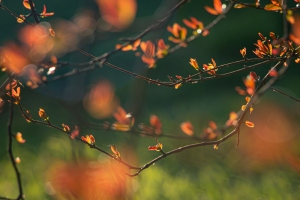 Paisagem Natural/a força da primavera