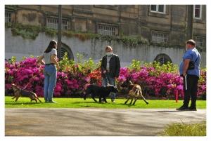 Gentes e Locais/Passeio de Caninos - Jardim do Carregal -Porto