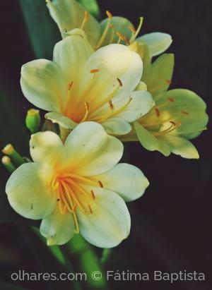 Macro/Do tempo de todas as flores