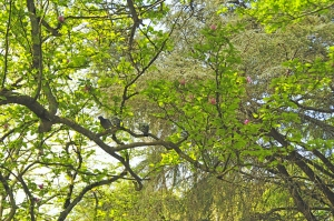 Paisagem Natural/Escondidos entre as folhagens ........