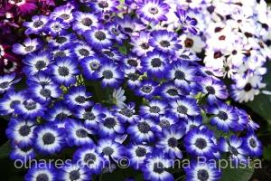 Outros/Canteiro florido