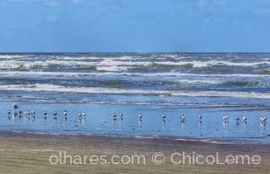 Paisagem Natural/Aglomeração na Praia da Reserva