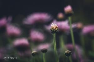 Outros/no jardim das flores cor de rosa