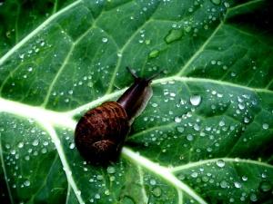 /Por entre os pingos da chuva