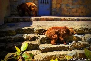 Gentes e Locais/ZOO de Lisboa - olhar os ursos