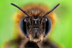 Macro/BEE