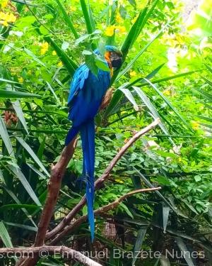 /Papagaio