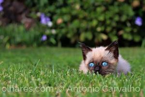 /Olhar felino (c/desc)
