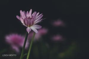 Paisagem Natural/lilás