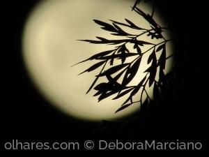 /Moon