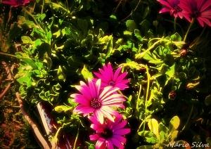 Outros/As minhas flores