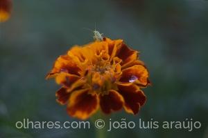 /flor e bicho