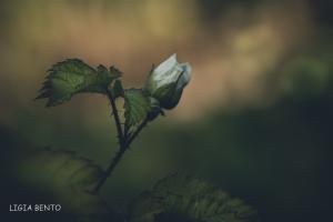 Paisagem Natural/a rosa no jardim