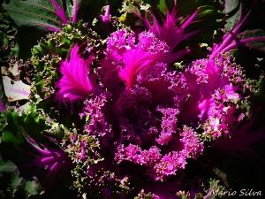 Outros/hortaliça ou flor