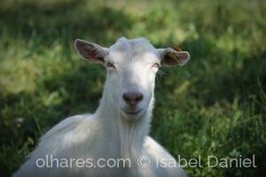 Animais/Das terras de Sicó