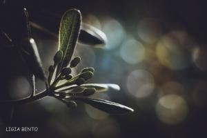 Paisagem Natural/de frente a luz