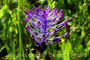 Macro/Flor do campo