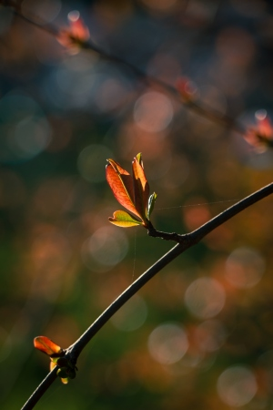 Paisagem Natural/com luz própria
