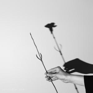 Abstrato/sombra de abril