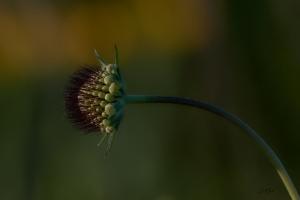 Paisagem Natural/Spiky