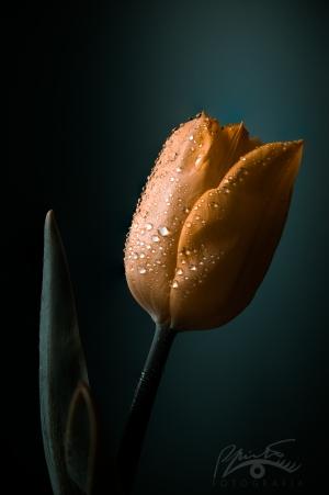 /olhar uma simples flor