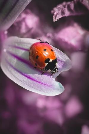 /violeta