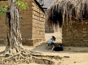 Gentes e Locais/a crueza do quimbo