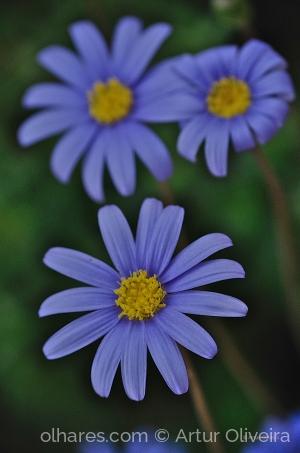 Outros/Flower Power Blue