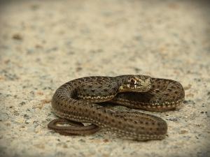 /Snake...